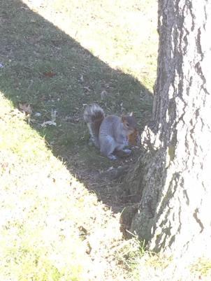 Squirle.jpg